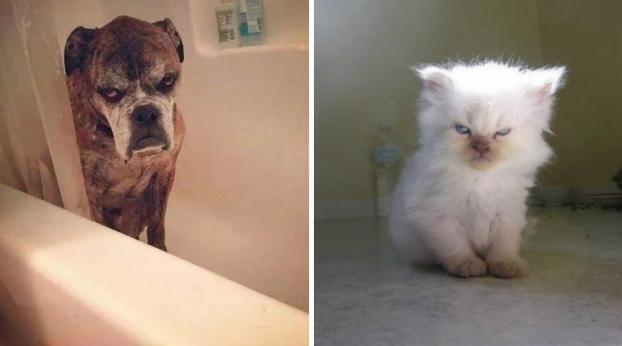 17 fotos de animais muito mau-humorados