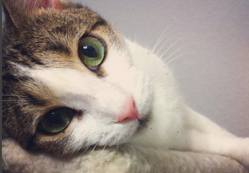 Este gato sem MEMÓRIA vai fazer você se DERRETER!