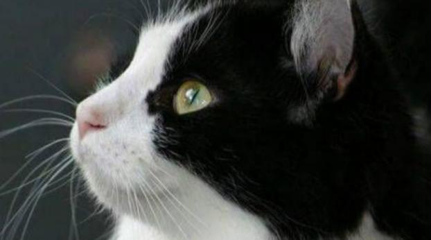 Um gato de Londres reaparece em...Paris