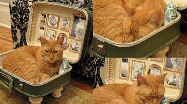 6 dicas de decoração para quem mora com um animalzinho