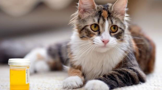 DICAS NATURAIS para que seu gato e/ou seu cão não urine em locais indesejados