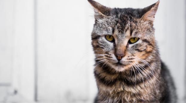 E quem não ama seu gato idoso?! 😻❤🐱