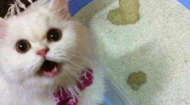 Dicas naturais para que seu gato ou cachorro não urine em locais indesejados