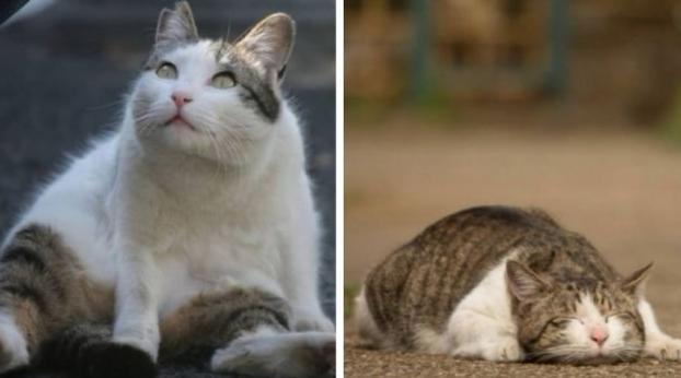 Gatos de Tokyo flagrados em poses geniais!