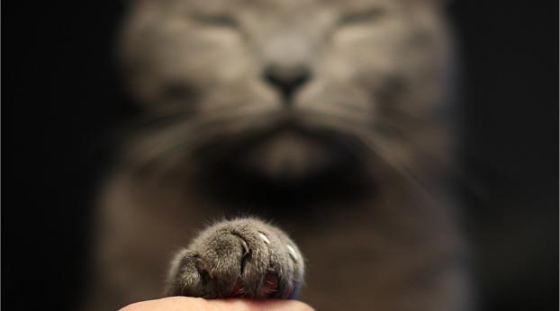 O olhar SURPREENDENTE do gato KEVIN vais fazer você se apaixonar!