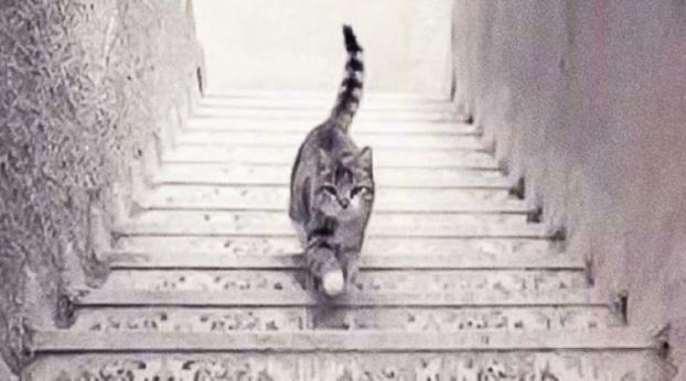 TESTE: o gato está subindo ou descendo as escadas?