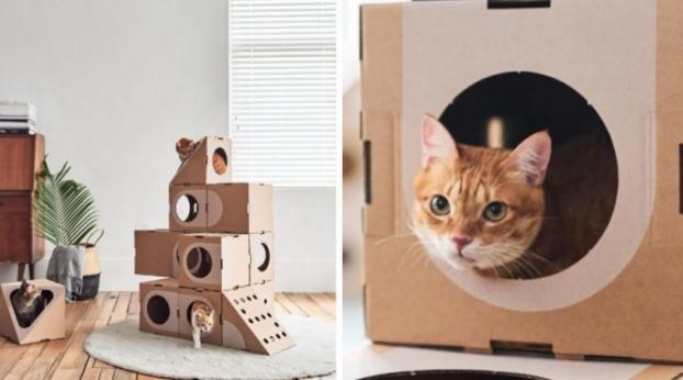 Empresa transforma caixas de papelão numa cidade para gatos