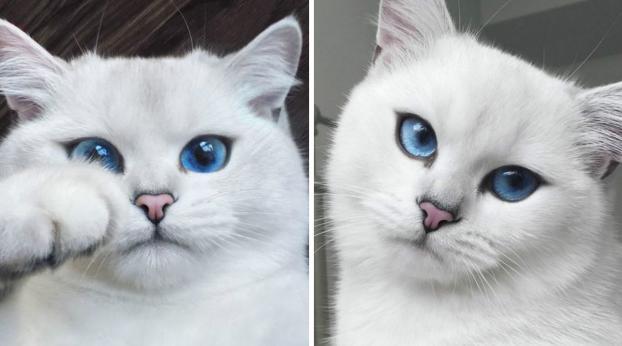 Este gato possui os olhos mais belos que você já viu