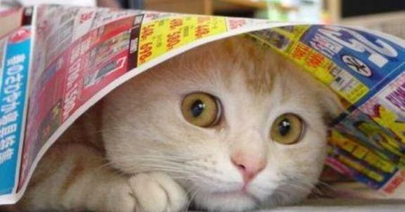 Coisas que os gatos ODEIAM