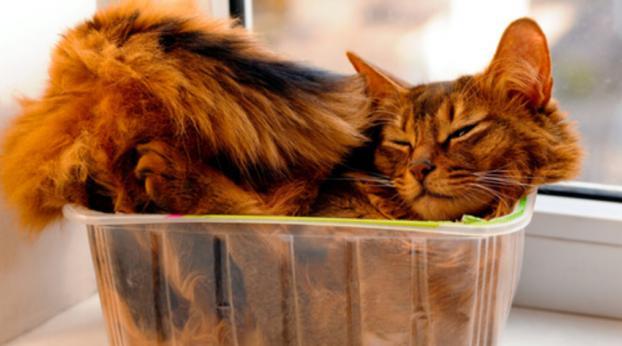Alguns TRUQUES que todo dono de gato deve conhecer