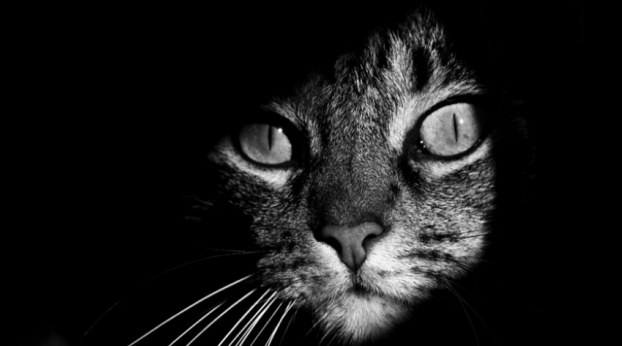 Gatinho misterioso protege veterano de guerra do suicídio