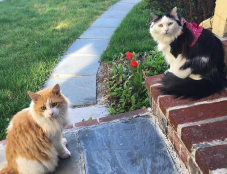 A TERNA história destes gatos APAIXONADOS