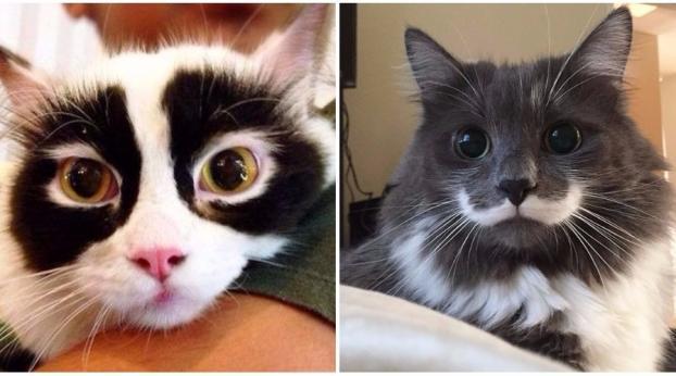 Gatos que são verdadeiras celebridades por causa de suas marcas