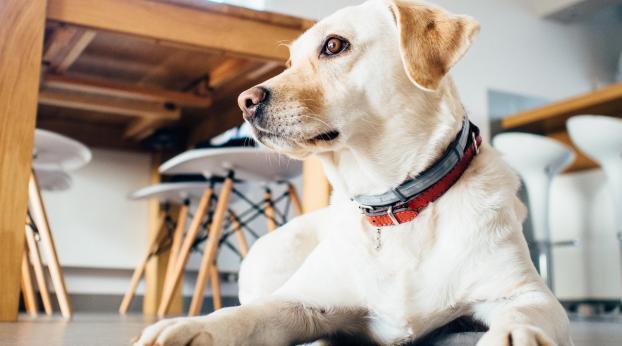 Bem-estar no trabalho: e se levássemos nosso animal ao escritório?