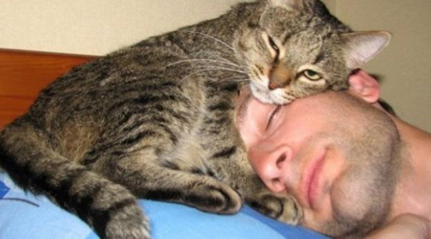 Para defender seus donos esses gatos têm reações incríveis