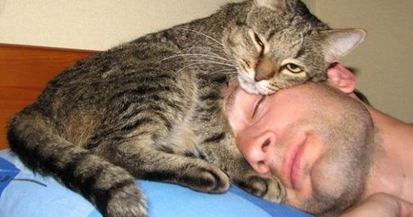 A incrível reação de alguns gatos na defesa de seus donos
