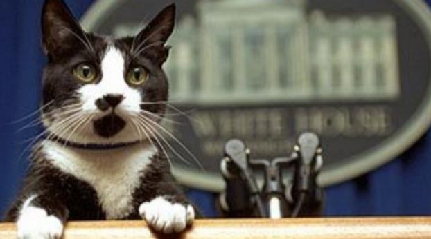 Socks, o gato presidente que inspirou o DIA INTERNACIONAL DO GATO