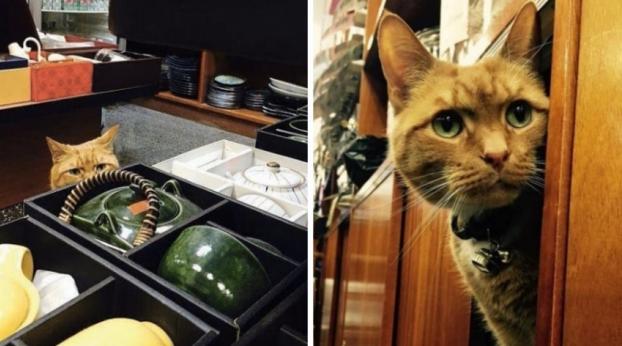 Conheça o Gatinho Vendedor que trabalha numa loja há mais de 10 anos
