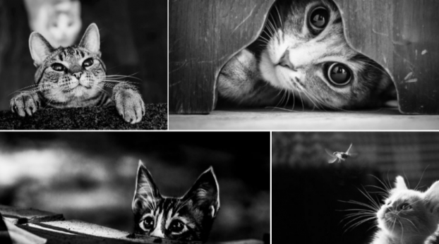 A misteriosa vida dos gatos em fotos preto e branco