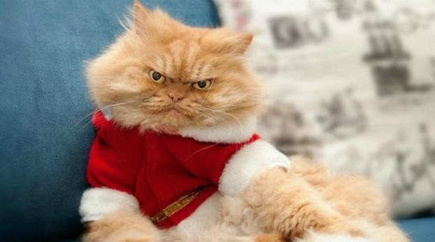 Conheça esta fofura de gato que, com cara de muito bravo, faz sucesso na internet