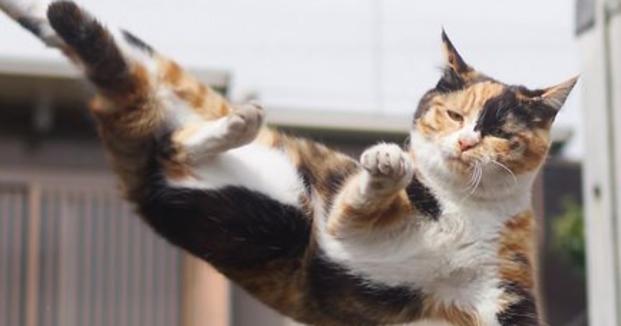 Saiba que todo gato possui um poderoso ninja dentro de si