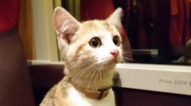 À procura de seu dono, gatinha viaja mais de 20 km de trem