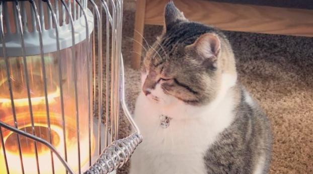 Gatinho apaixonado por aquecedor faz sucesso na internet