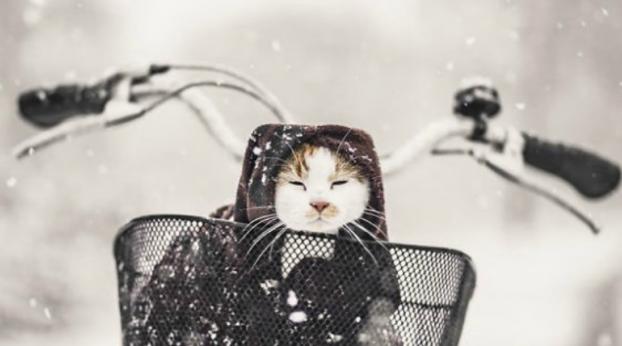 Fotógrafa retrata a vida de seus dois gatos no inverno