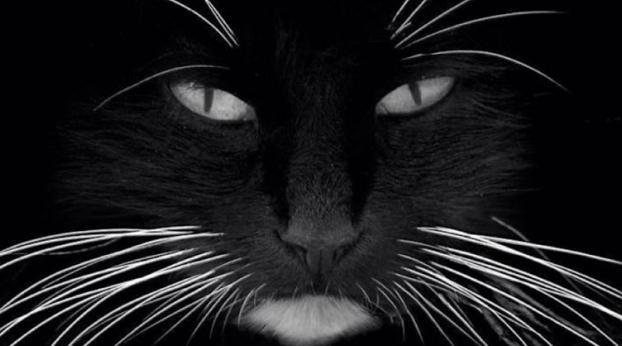Algumas coisas estranhas sobre os gatos que vão te surpreender