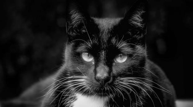 Seu gato olha fixamente nos seus olhos, sem nunca desviar?