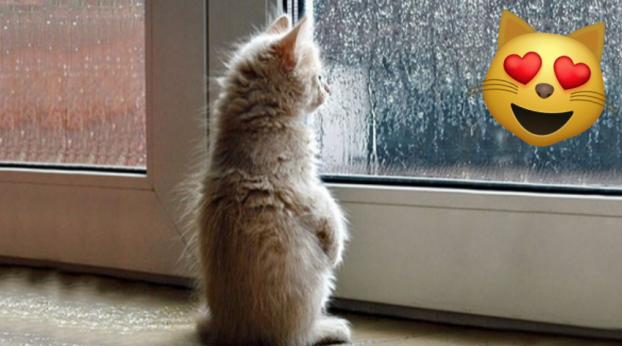 08 sinais de que seu gato te ama (muito)