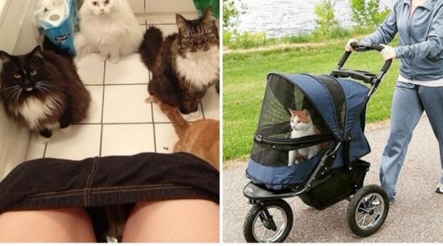 Coisas que só donos de gatos vão entender