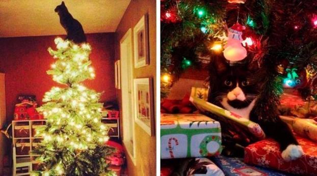 Os gatos e as árvores de Natal: uma história de amor