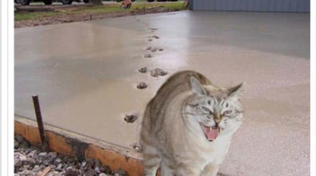 Fotos hilárias e comoventes que provam o quanto os gatos são especiais e o quanto a humanidade nã...