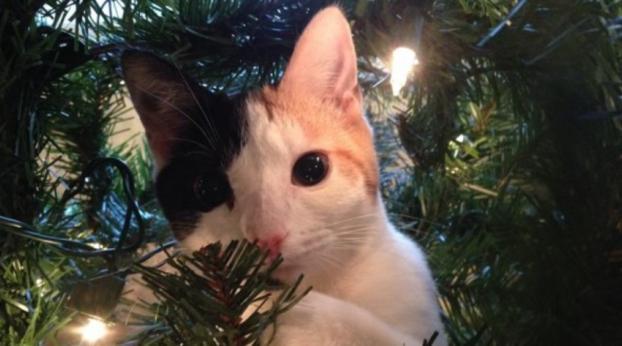 COMPROVADO: Gatos e árvores de Natal sempre rendem belos momentos