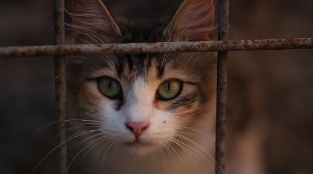Soluções caseiras para gatos com problemas de comportamento