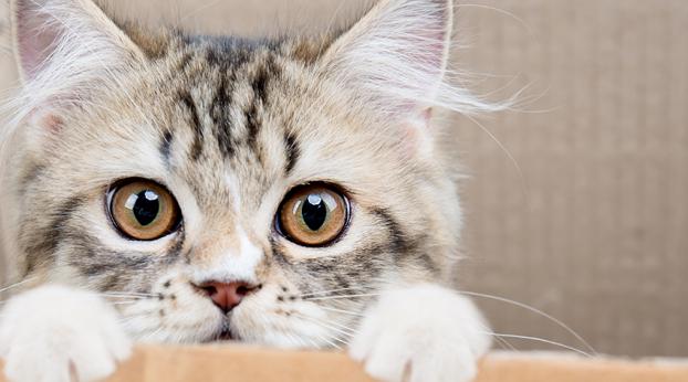 Algumas coisas que você não deve fazer com um gato