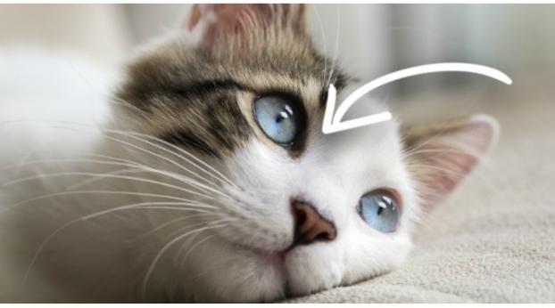 Meu gato pode realmente VER no ESCURO?