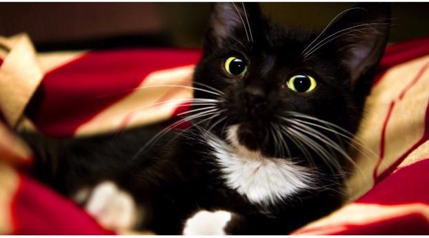 Por que você nunca deve tocar nos bigodes do seu gato?