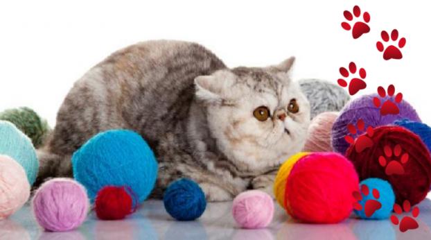 [MOMENTO FOFURA] Estes cinco gatinhos vão derreter seu coração