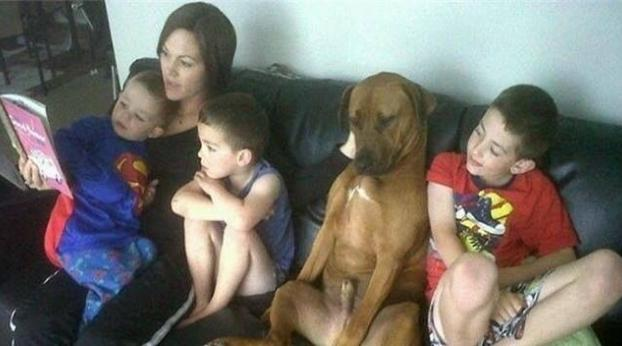 Certamente, estes cachorros não sabem que são cachorros
