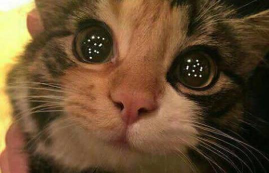 Sashimi, o gato SOBREVIVENTE que SALVA sua FAMÍLIA!